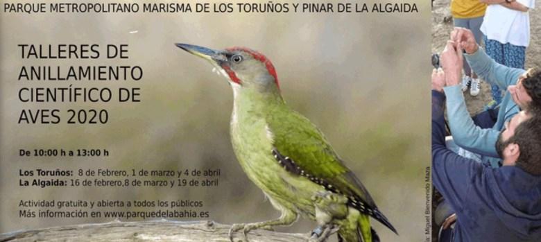 """Taller de Anillamiento Científico de Aves """"Los Toruños y Pinar de la Algaida"""" 2020 (PUERTO DE SANTA MARÍA)"""