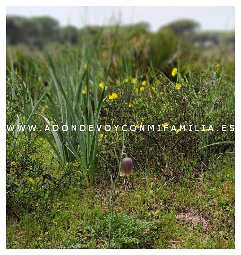 area recreativa dehesa de las yeguas adondevoyconmifamilia 01
