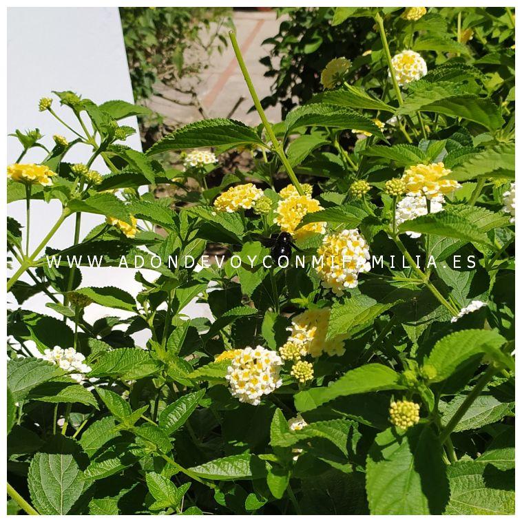 jardin botanico celestino muits rota adondevoyconmifamilia 02