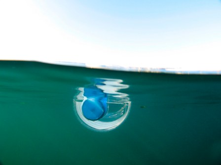 mineral water bottle floating in the Sydney Harbour.