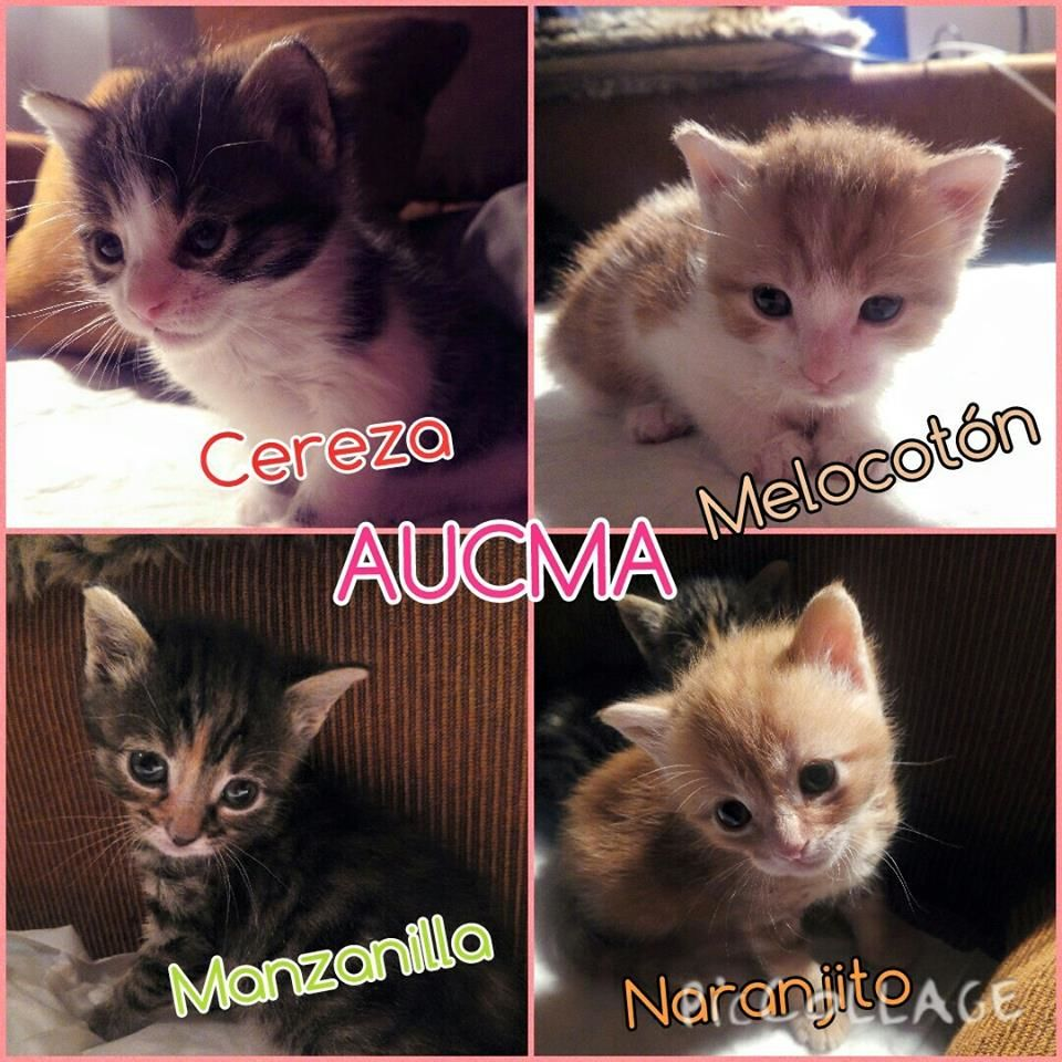 Cereza, Manzanilla, Naranjito y Melocotón ADOPTADOS!!