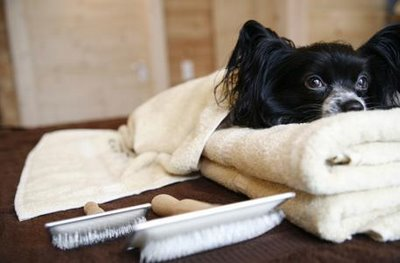Respuesta curiosa de un hotel al preguntarles si admitían perros.