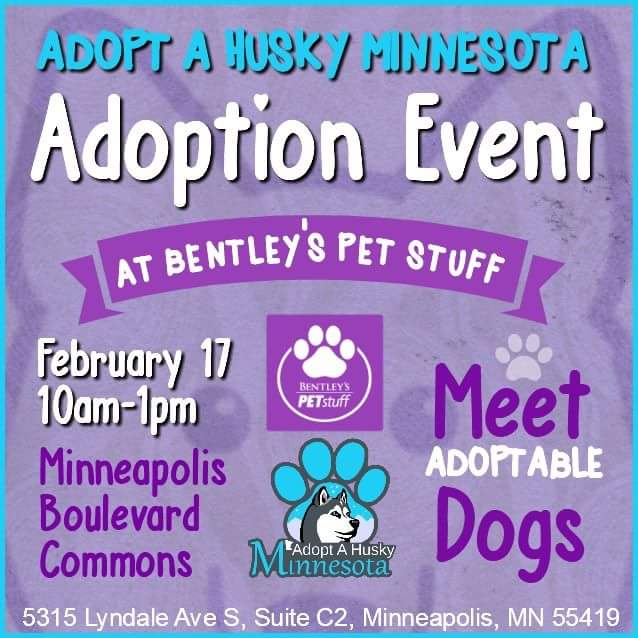 Adopt A Husky Minnesota Adoption Event