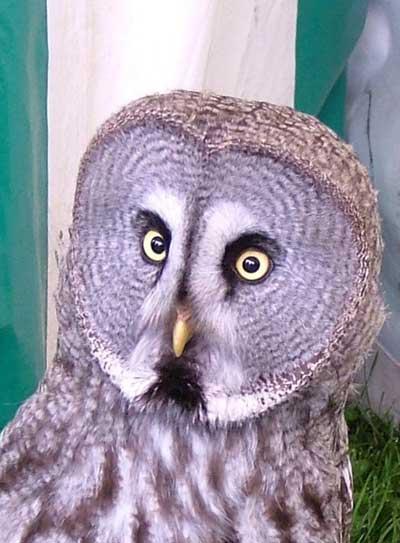 Thunder Adopt An Owl