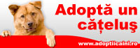 Adopta un catelus