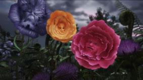 Rosas Falantes - Disney