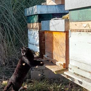 gatto e api