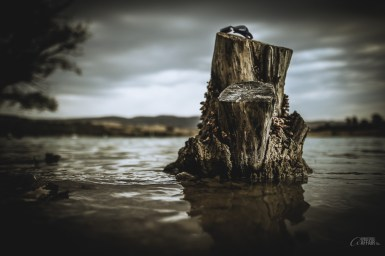 [SNAG] A stump, or snag, in the water. Not much, but something that can can be staged quite well :-)