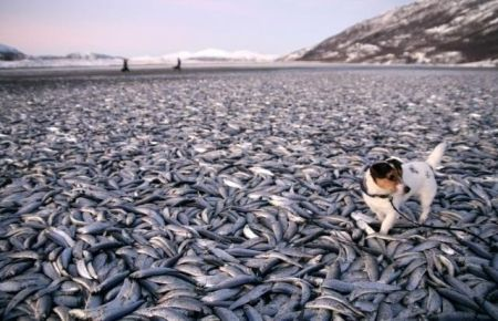 Balık Stoklarımıza En Çok Zarar Veren Yaklaşım Tarzları