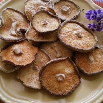 Week Four Update Mushroom Makeover