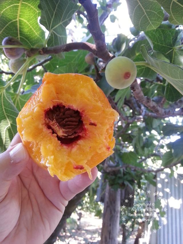 Elberta peach, juicy, sweet and the best bite of the day! #TASTE14