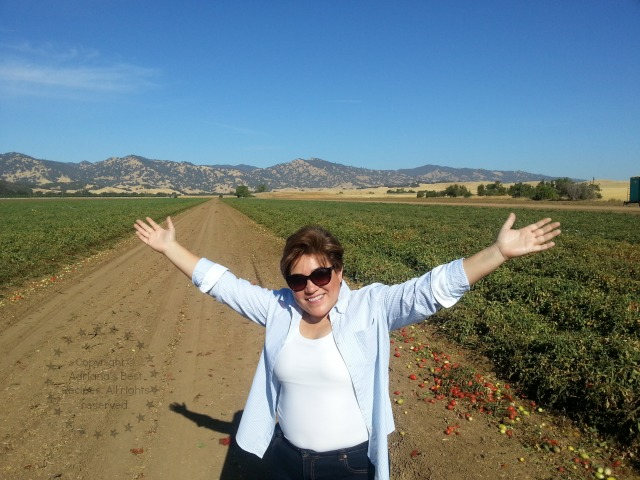 Visiting the Campbell's tomato fields #TASTE14