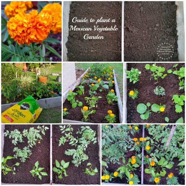 Guide to plant a Mexican Vegetable Garden #MiJardinalidad #ad