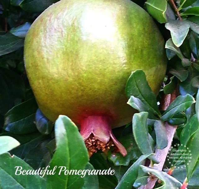 Beautiful pomegranate #TASTE14