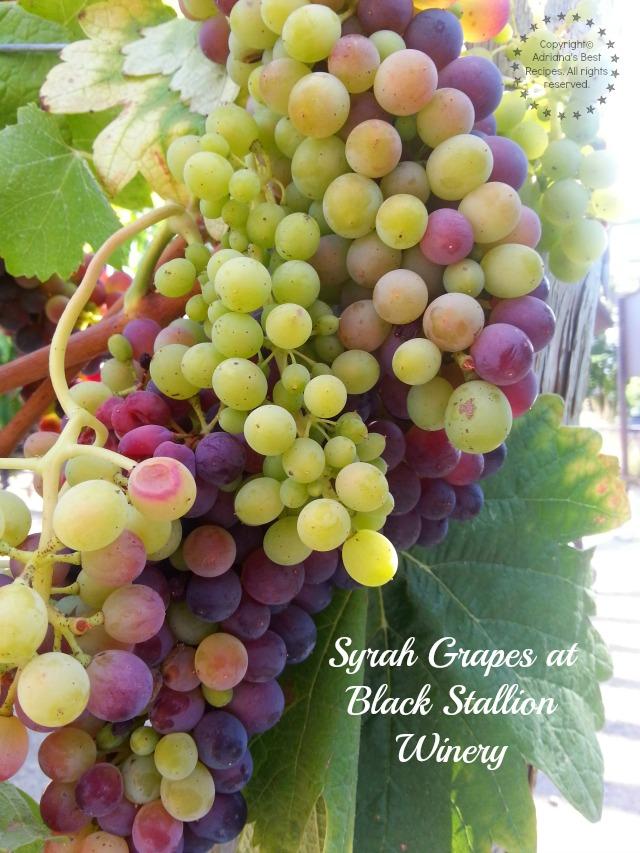 Syrah Grapes at Black Stallion Winery #TASTE14