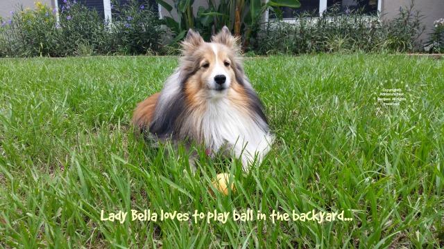 Lady Bella loves to play ball in the backyard #MiJardinalidad #ad