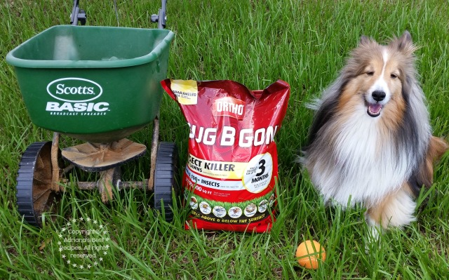 Preventing Fleas on the Lawn with Scotts Products  #MiJardinalidad #ad