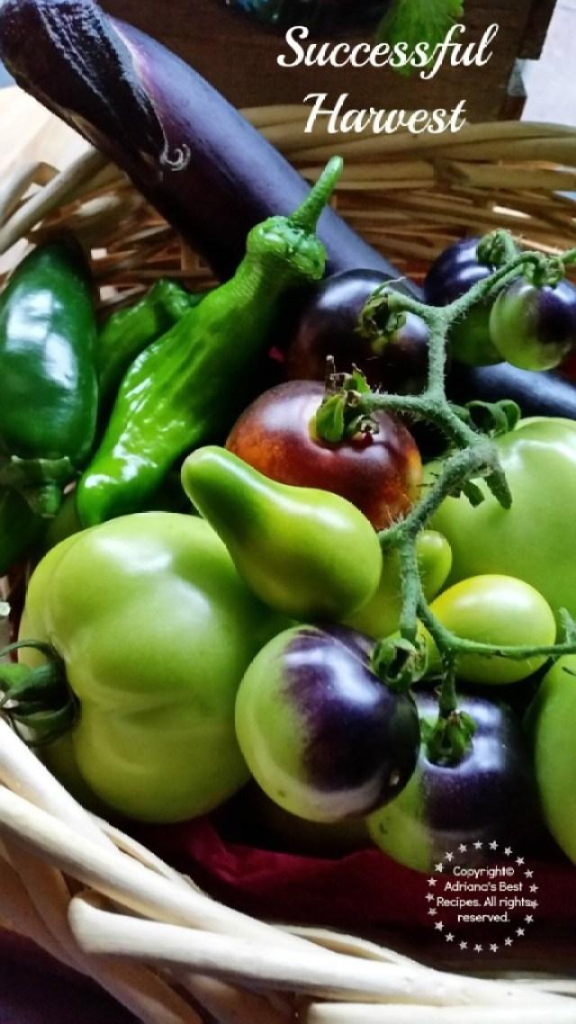 Successful Harvest #MiJardinalidad #ad