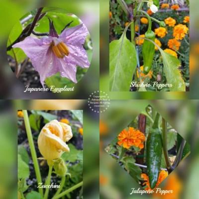Preventing Bugs on Vegetable Gardens