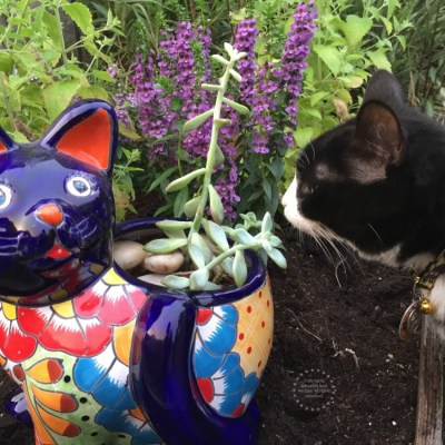 Planting a Kitty Garden in the Backyard