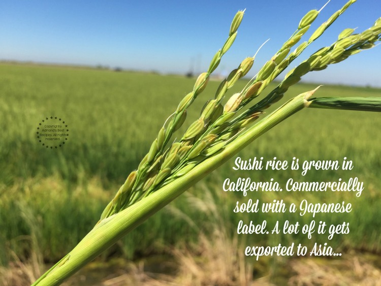 Most of the sushi rice is grown in California