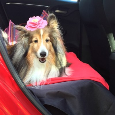 Best Dog Travel Tips from a Dog Lover