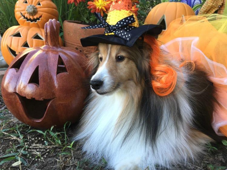 doggie-walks-fun