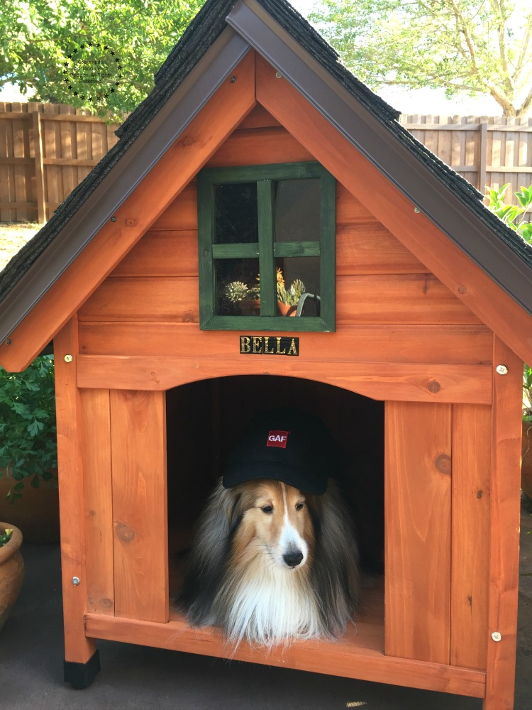 Bella enjoying her new best dog house