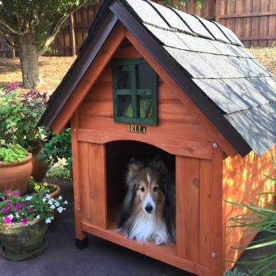 Building the Best Dog House