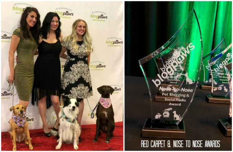 The BlogPaws Red Carpet and Nose To Nose Awards