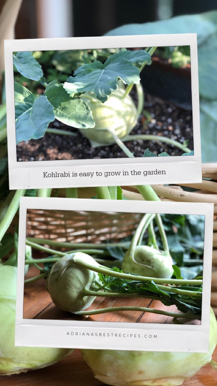 Kohlrabi is available year-round in certain areas, however, is also available frozen. But you can grow it at home in your garden too.