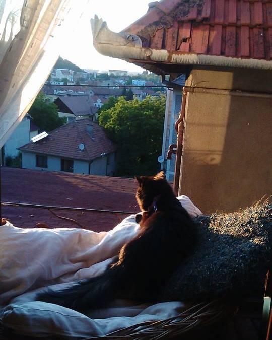 tăcerile mele, tăceri de pisic