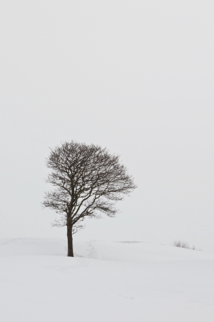 Tree on a snowy hillside