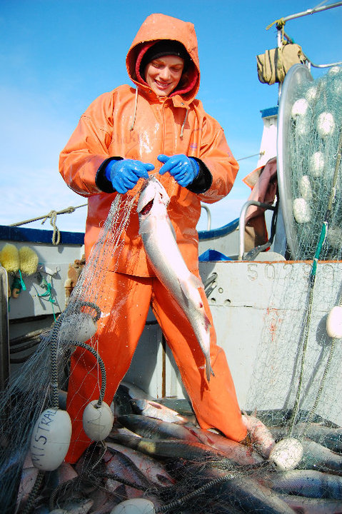 Picking fish