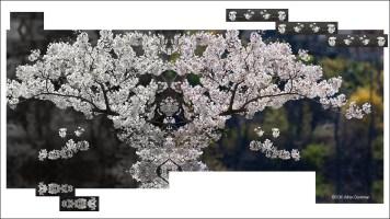 Blossom Swing