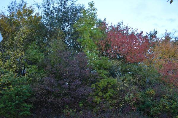 Beautiful autumn shades.
