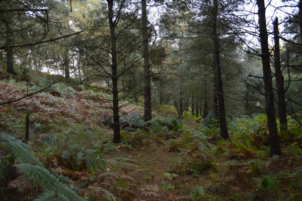 In the forest on Cannock Chase.