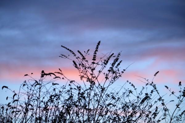 Beautiful sky behind wild flowers.