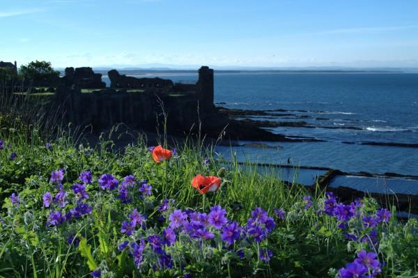 St Andrews Castle set amongst wild flowers and blue sea.