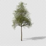 Download preview of small sapling