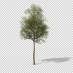 Download preview of small tree