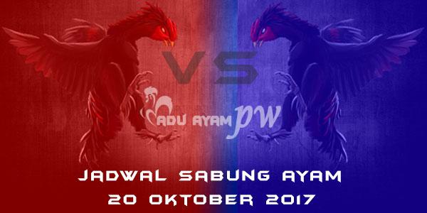 jadwal sabung ayam 20 Oktober 2017