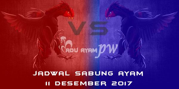 jadwal sabung ayam 11 Desember 2017