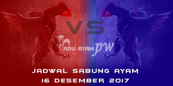 jadwal sabung ayam 16 Desember 2017