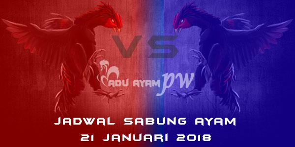 jadwal sabung ayam 21 Januari 2018
