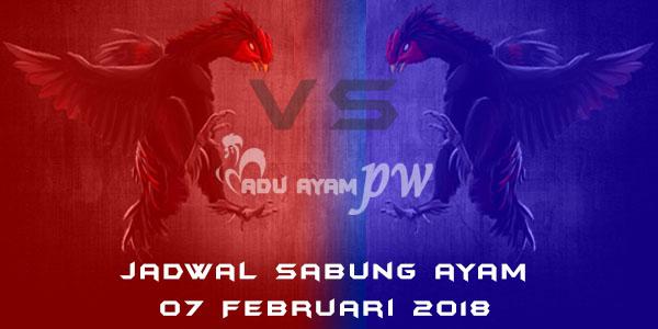 jadwal sabung ayam 07 Februari 2018