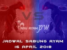 jadwal sabung ayam 16 April 2018