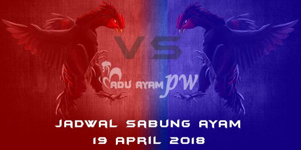 jadwal sabung ayam 19 April 2018