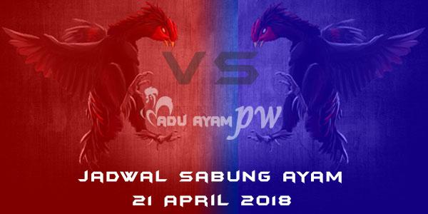 jadwal sabung ayam 21 April 2018