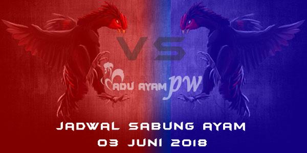jadwal sabung ayam 03 Juni 2018